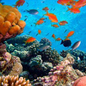 Marine Biology - Marji McIlvaine - Master's Mark Academics